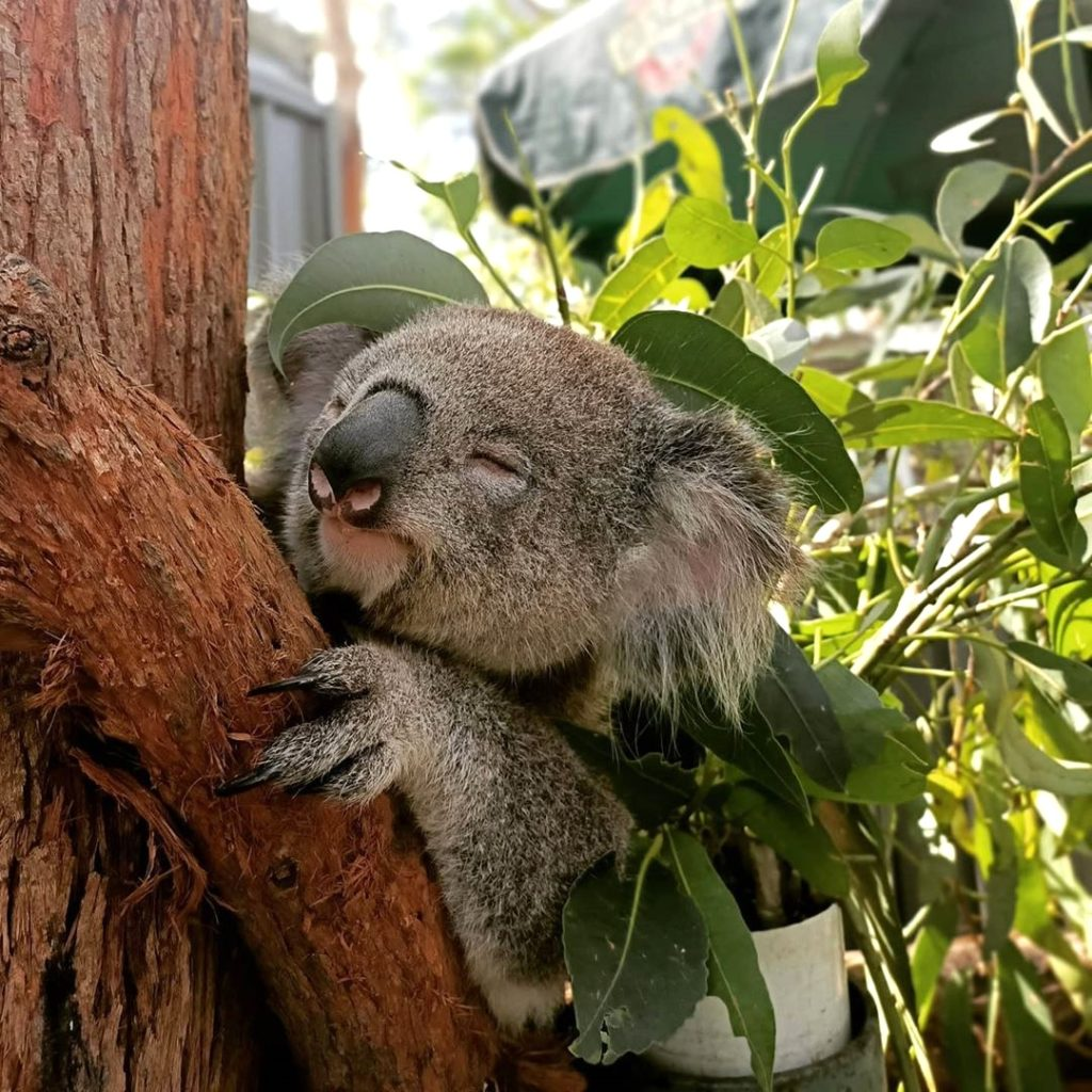 bénévolat animaux australie